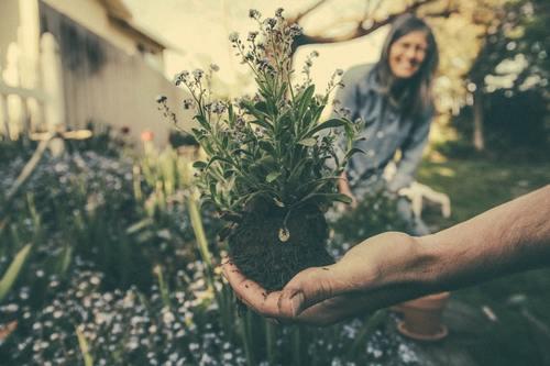 Dienst tuin hulp